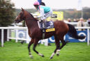Frankel on his final racecourse appearance, remaining unbeaten.