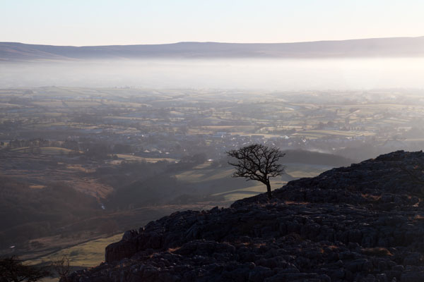 03D-0609 Isolated Tree and Mist Above the Village of Ingleton Viewed from Twistleton Scar Yorkshire Dales UK