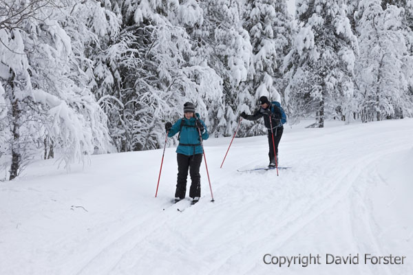 05D-0841 Cross Country Skiers in the Pallas-Yllastunturi National Park Near Yllas in Finnish Lapland Finland.