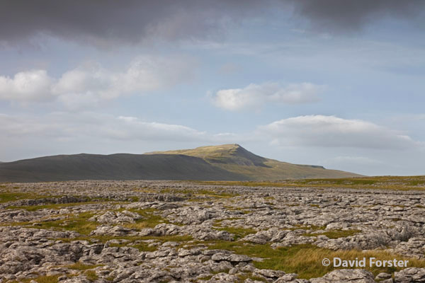 05D-4765 Whernside from White Scars on the Lower Slopes of Ingleborough Yorkshire Dales UK