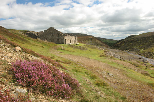 06-9086 The Remains of the Surrender Lead Smelt Mill With Purple Heather in Foreground, Swaledale, Yorkshire