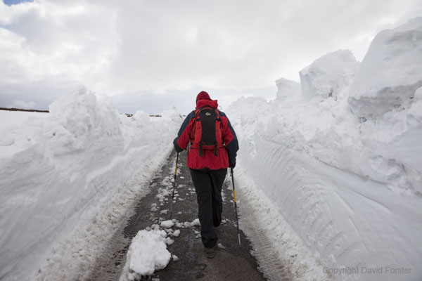 06D-4181 Walker Walking between walls of snow on the road alongside Cow Green reservoir in Upper Teesdale County Durham UK.