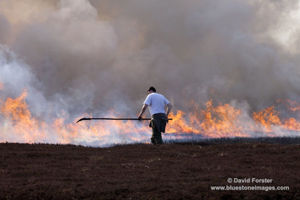 06D-6362 Gamekeeper Controlling Heather Burning in Upper Teesdale County Durham