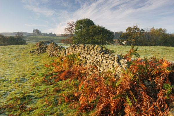 07-3730 Autumn Ferns and Drystone Wall Holwick Teesdale County Durham