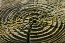 9855 Weathered tree growth rings.