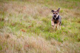 Pet Photography Nottingham 1