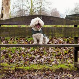 Pet Photography Nottingham 4