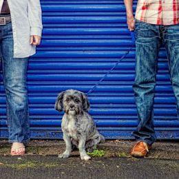 Pet Photography Nottingham 5