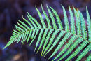 Green fern in the New Forest, Hamoshire, England.