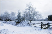 Snow, path and Gate