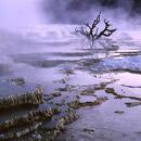 Mammoth Springs dawn