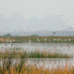 Egrets, Nihn Bihn, Vietnam