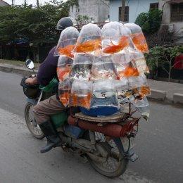 Transport Vietnamese style 1