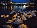 The Queen's swans