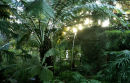 Ferns in the Temperate House
