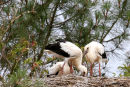 0005 IMG 0305 White Storks