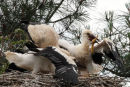 0049 IMG 1507 White Storks