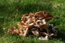 Fungi 11