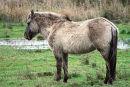 IMG 3438 Horse