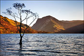 Lone Tree at Buttermere