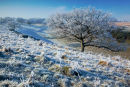 Hoar Frost Middleton Down
