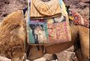 Camel saddle