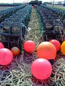 167  Leverburgh Lobster Pots