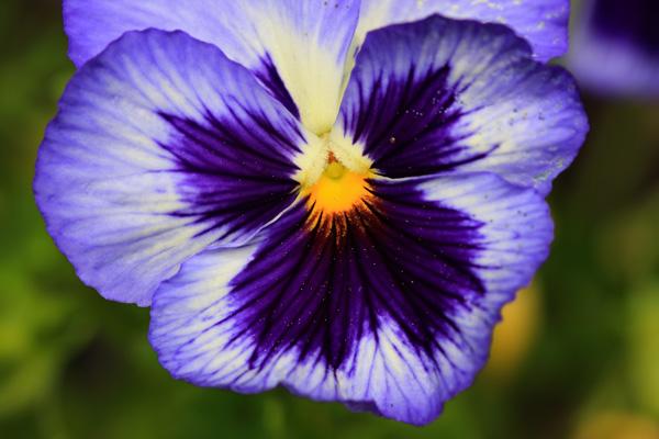 Michel bury photographie de nature photography papillon - Image papillon et fleur ...