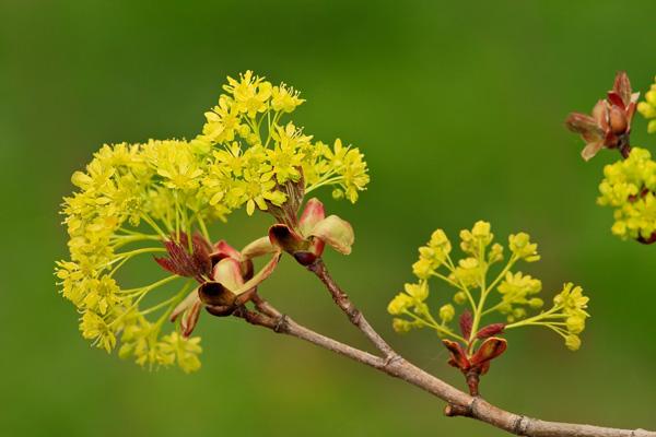 michel bury photographie de nature photography arbre en fleurs au printemps. Black Bedroom Furniture Sets. Home Design Ideas
