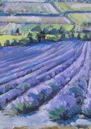 Lavander Field Near Lullingstone