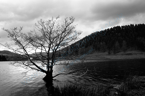 Submerging tree