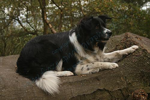 Jess lying on a log