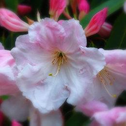 Tatton Flower 2