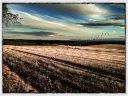 Field in Fife