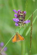 skipper and self heal