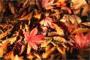 autumn floorscape